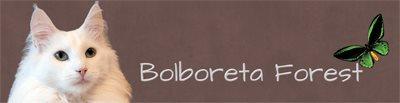 Banner Bolboreta Forest