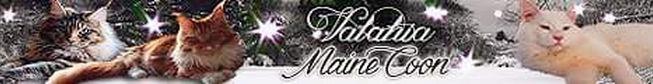Banner Valahia