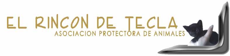 Banner El Rincón de Tecla