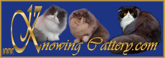 Banner Knowing Cattery