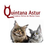 Banner Quintana Astur
